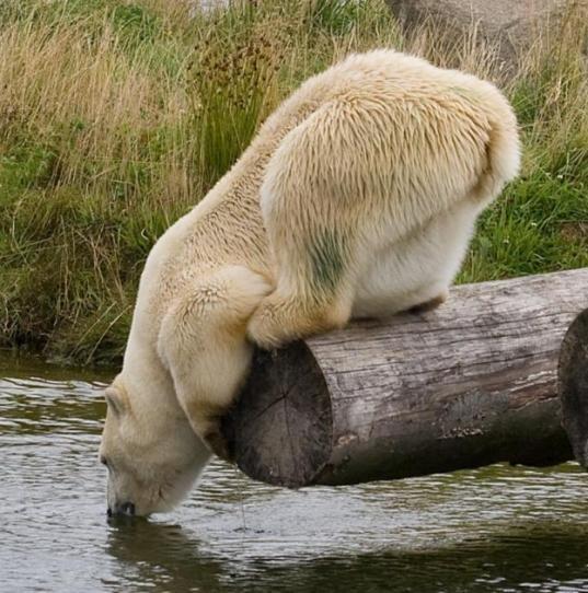 Ничто человеческое медведям не чуждо 6f2e829d731b