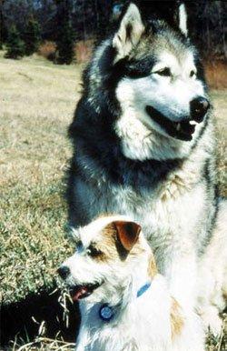 Диалог с собакой: сигналы примирения 106913bc3d54