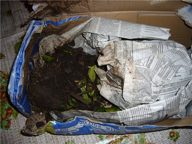 Растения из Сочинского питомника 9a7289164fc3
