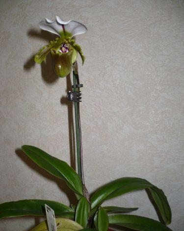 Обсуждение Орчидинна (Orchid Inn., USA) Af16edd3b9be
