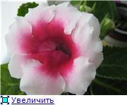Семена глоксиний и стрептокарпусов почтой - Страница 7 Ea581d610eeft