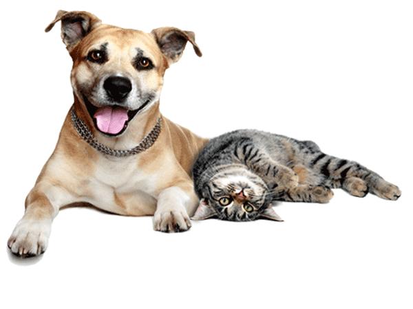 Интернет-зоомагазин Pet Gear - Страница 6 78f79e82af4b