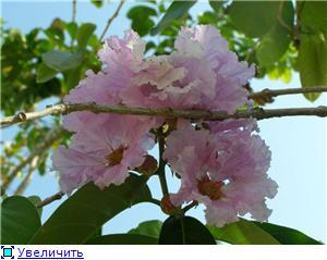 Орхидеи и прочая красота на о. Пхукет - Страница 2 2f08f2c9a84ct