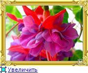 ФУКСИИ В ХАБАРОВСКЕ  - Страница 3 F923228e49dbt