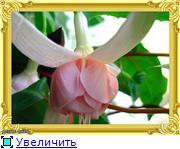 ФУКСИИ В ХАБАРОВСКЕ  9018c901d595t
