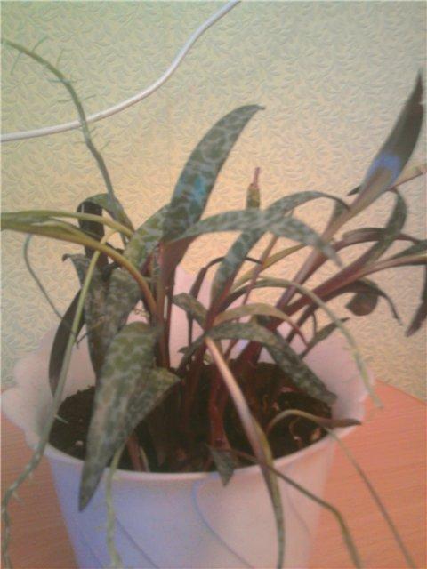 Как называется растение 3c9bf4268195