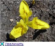 Весна идёт... Fd07ce3afe0dt