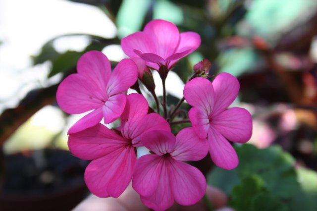 Растения от FILIGERa - Страница 3 E9abb99429b2