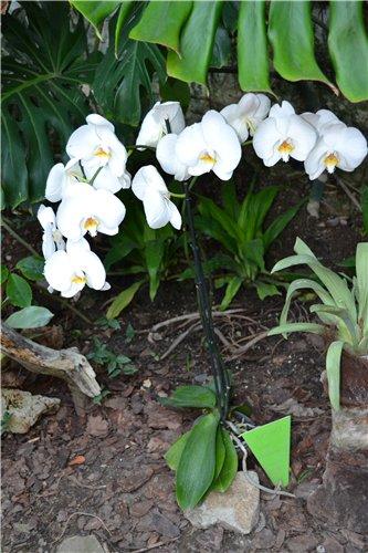 Выставка орхидей Никитского ботанического сада 2478e9d415a4