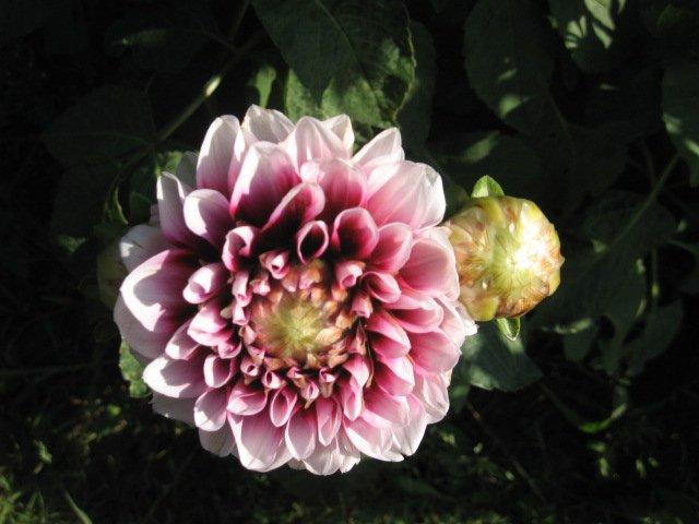 Во саду ли, в огороде... - Страница 6 C6f121106883