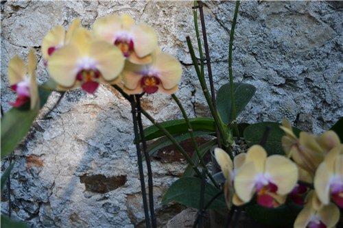 Выставка орхидей Никитского ботанического сада 3d1ceccf1df5