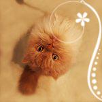 Аватары с животными 377219801ded