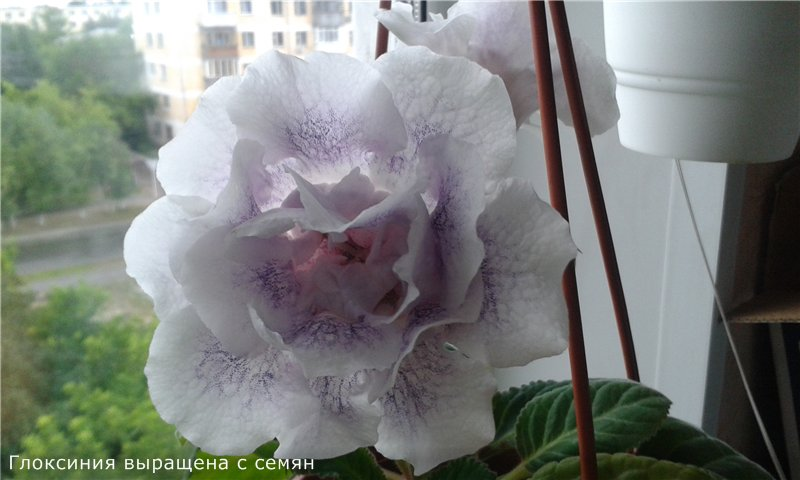 Весеннее  цветение (Хваст от Веры) - Страница 8 7a8bdfbcf496