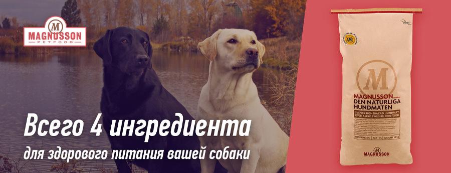 Интернет-зоомагазин Red Dog: только качественные товары для  - Страница 11 7812c996031f