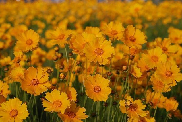Японские цветы 00366d3f0484
