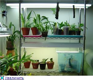 Размещение орхидей B066f3bb7699t
