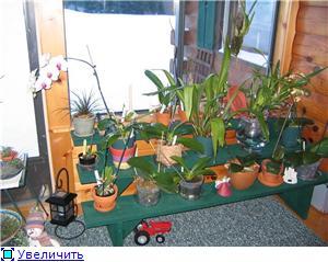 Размещение орхидей Fd5835b144cet