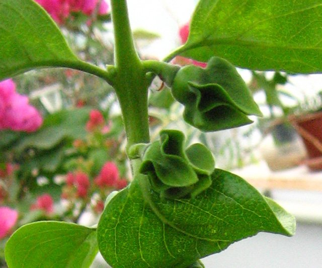 Растения из Нижегородской оранжереи 10dd910473eb