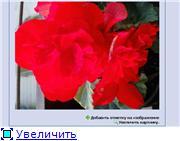 Разные Вопросы о цветах B6829f55d362t