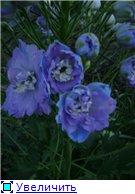 Лето в наших садах - Страница 3 56faa26e52bdt