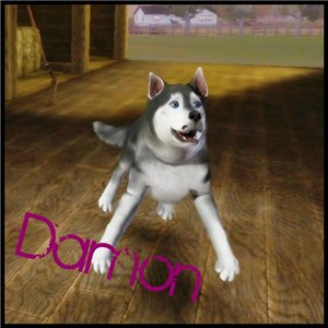 Собаки - Страница 2 C1efd1c3b0d0