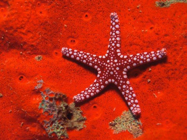 Морская звезда 34c5301f095a