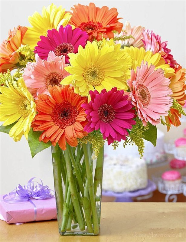 держит белую фото цветы герберы с днем рождения парни-модели оказывают