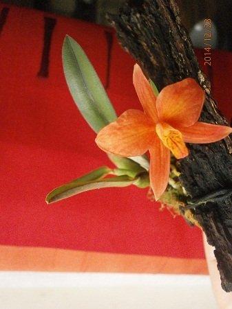 Разводите ли дома цветы и какие? - Страница 34 F5c348a798fe