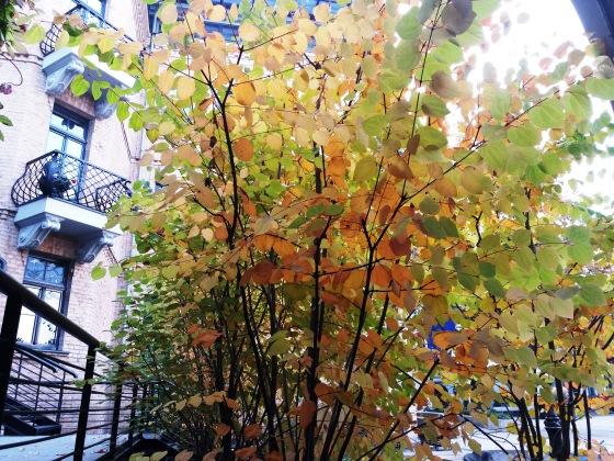 Осень, осень ... как ты хороша...( наше фотонастроение) - Страница 8 8f30597198dc