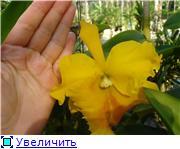 Орхидеи и прочая красота на о. Пхукет - Страница 2 0180c3d0061ct
