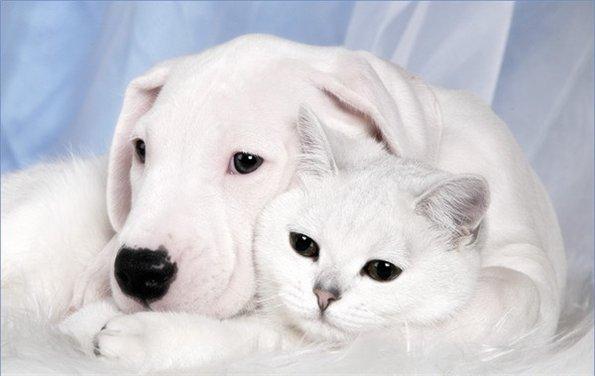 Забавные животные - Страница 3 144987973a85