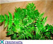 ФУКСИИ В ХАБАРОВСКЕ  - Страница 11 0153d47a9432t