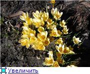 Весна идёт... 4fed9062a40bt