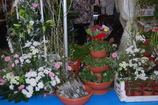 Международная выставка цветов AstanaFlorExpo - 2011 Cc53b5c19c26
