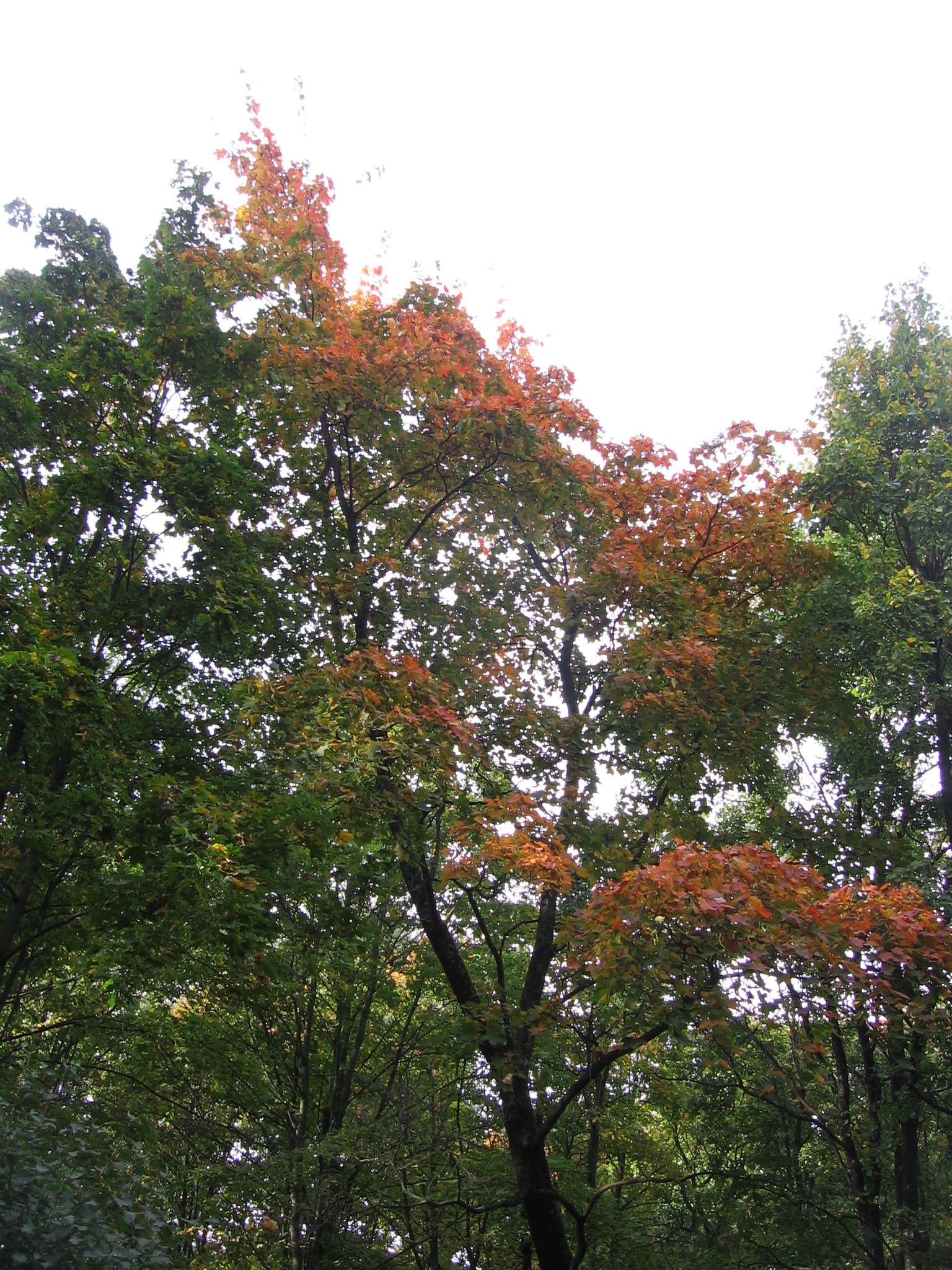 Фото конкурс: Осень в моем городе  5169766beffe