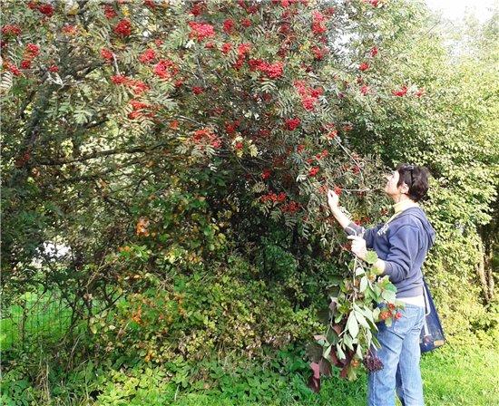Осень, осень ... как ты хороша...( наше фотонастроение) - Страница 4 00be8112ea55