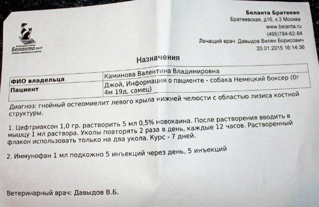 Москва, Джой, кобель, д.р.18.09.2014 3676f21573e2