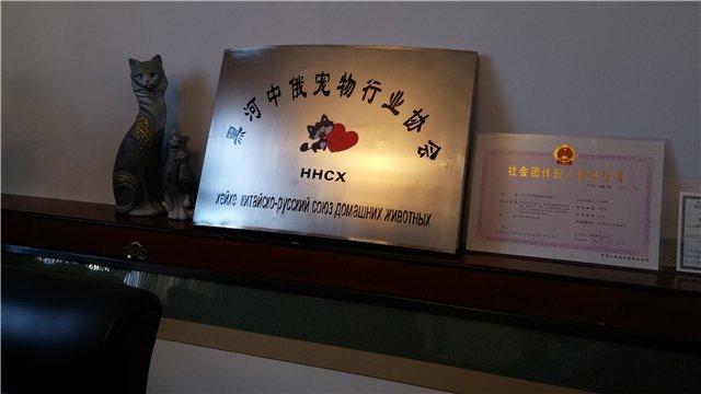 "Международная выставка кошек AFC ""ДРУЖБА БЕЗ ГРАНИЦ"", 2 мая 2015 г, г. Хей-Хе (Китай) B01720ec9932"