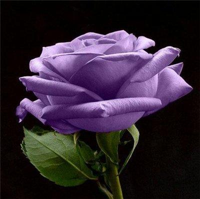Поздравляем с Днем Рождения Анну (Anna_60) Bb774bfe16adt