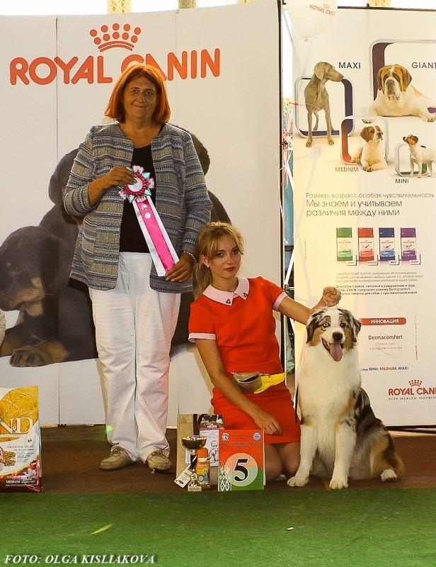 Выставочные успехи наших собак - 5 - Страница 30 09e3f42fda35