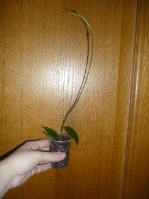 декоротивно-лиственные и красивоцветущие растения - Страница 3 84430a3307cc