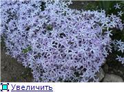 Растения для альпийской горки. 0875a1582d39t