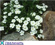 Растения для альпийской горки. 09500d7774f5t