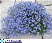 Растения для альпийской горки. E2dc8c7c4b36t