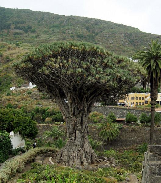 Растения, связанные с драконами 3726b7fad44b