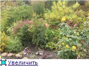Cад Людмилы Ивановой из черкасс C8f9f4677d68t