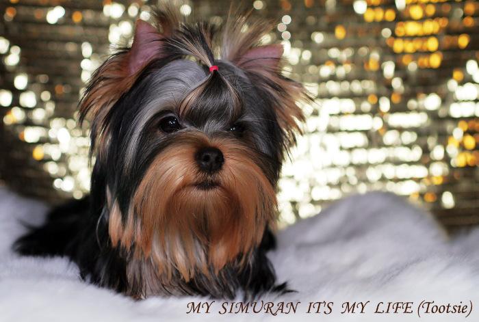 My Simuran It's My Life (Тутси)  6271ecc245c6