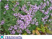 Растения для альпийской горки. - Страница 2 C0e9800e88e8t