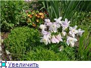 Растения для альпийской горки. - Страница 2 50d54157b282t