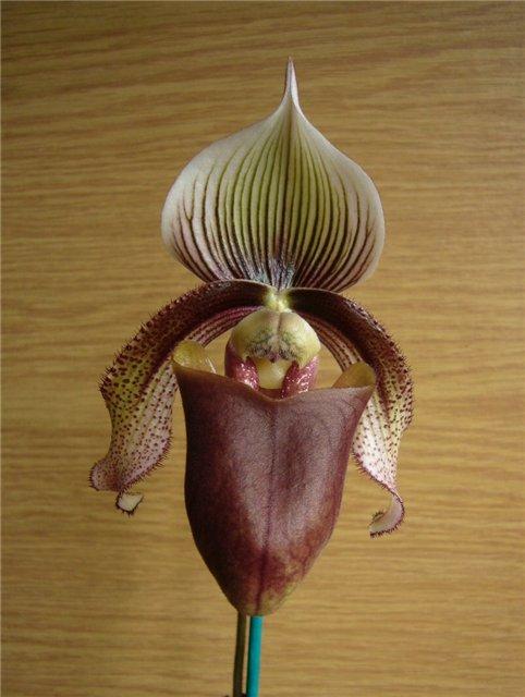 Обсуждение Орчидинна (Orchid Inn., USA) 5c3ace61f3c2